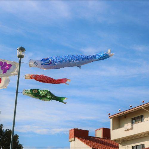 鯉のぼり飾っています